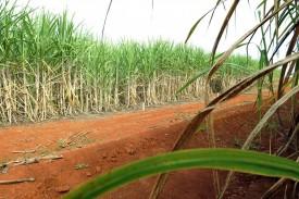 Etanol deve alcançar recorde de produção com 33,58 bilhões de litros