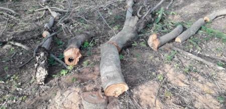 Ambiental aplica multa de R$ 500 mil em operação