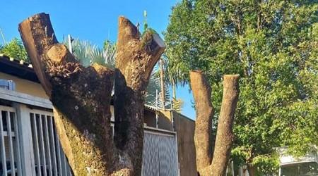 Polícia Ambiental detecta poda drástica não autorizada e aplica multa de R$ 1,5 mil em morador