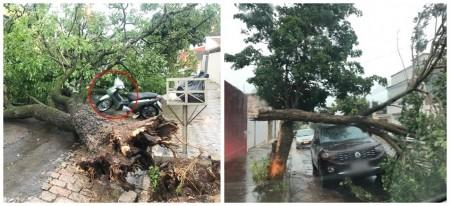 Por poucos centímetros, carro e moto ficam intactos após queda de árvores em Tupã