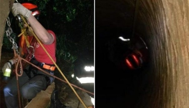 Bombeiros salvam boi que caiu em poço de 15 metros de profundidade