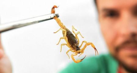 MP ajuíza medida e garante estoque de soro contra picadas de escorpião em OC