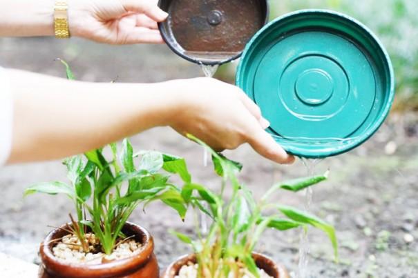 Período de chuvas aumenta risco de Dengue e Febre Amarela