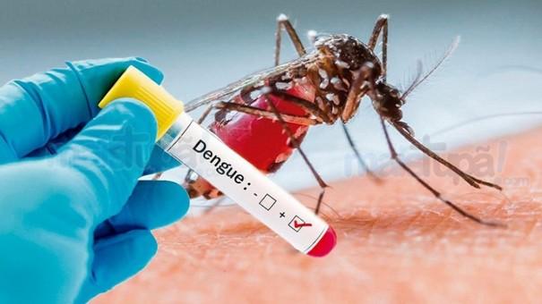 Dengue tem queda de 82% em junho