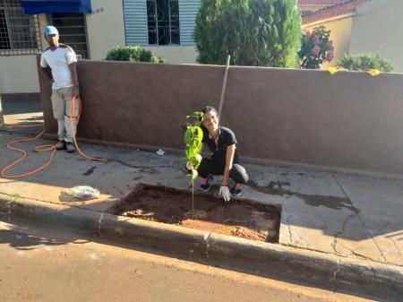 Sagres finaliza implantação de Espaços Árvore em prédios públicos