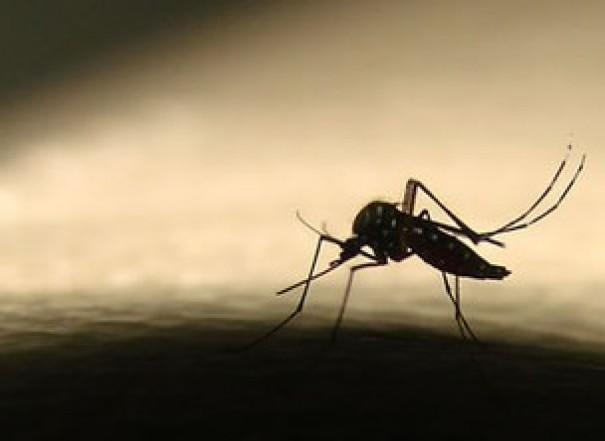 Sétima morte em decorrência da dengue é registrada em Tupã