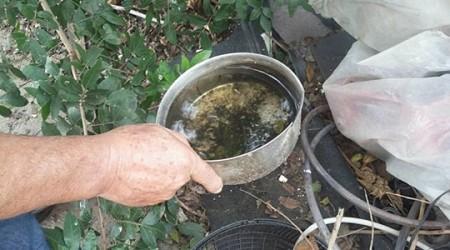 Adamantina tem 36 casos de dengue