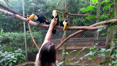 Vítimas do tráfico de animais, filhotes de tucano se recuperam e chegam ao aviário da Cidade da Criança