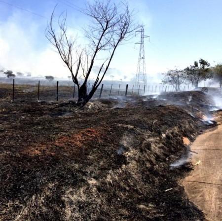 Incêndio às margens da rodovia devasta árvores e pastagens em Flórida Paulista
