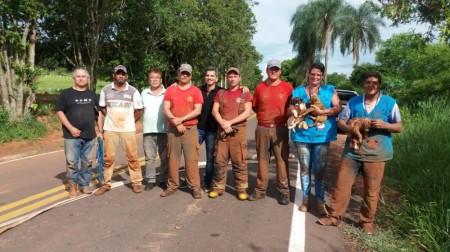 Cachorros presos dentro de tubulação em Parapuã são resgatados pelos bombeiros