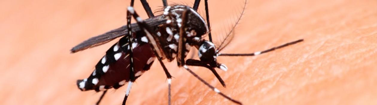 Dengue em Osvaldo Cruz: subiu para 286 os casos confirmados da doença no município