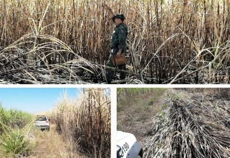 Polícia Ambiental aplica multa de mais de R$ 71 mil por fogo em propriedade rural de Bastos
