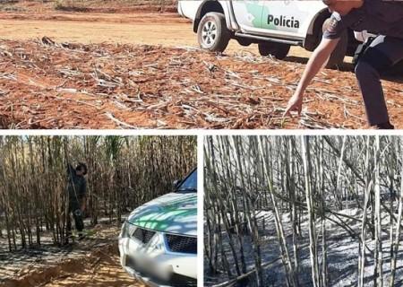 Fogo em área agropastoril em propriedade em Parapuã rende multa de mais de R$ 30 mil