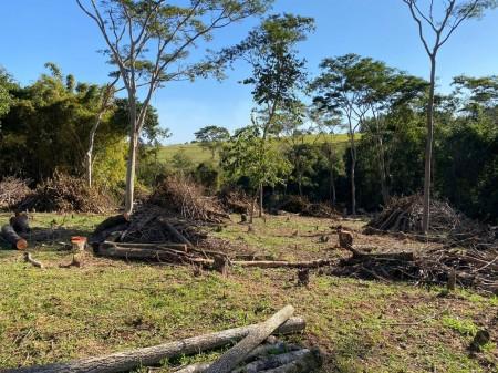 Fiscalização constata devastação de árvores e de vegetação em fazenda e proprietário é multado em mais de R$ 57 mil