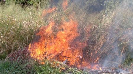Área Verde do Conjunto Habitacional Valter Seviero é atingida por queimada