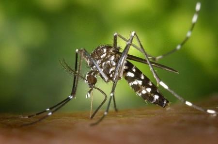 Osvaldo Cruz tem 952 casos de dengue em 2020