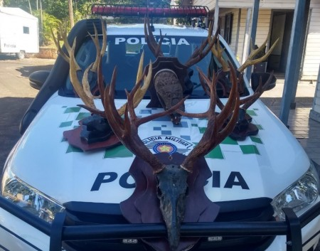 Homem leva multa de R$ 4 mil por manter em casa cabeças embalsamadas de animais silvestres em Santo Anastácio