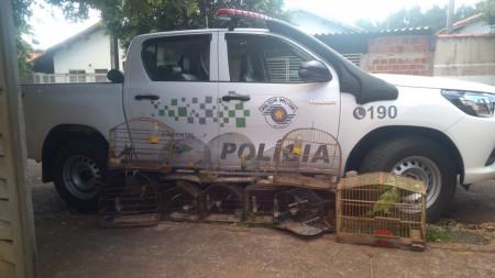 Morador de Rancharia leva multa de R$ 6,5 mil por manter aves silvestres em cativeiro sem autorização