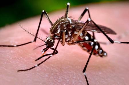 Sobe para 723 o número de casos confirmados de dengue em Osvaldo Cruz