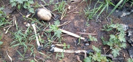 Deic vai assumir investigação sobre ossada humana encontrada em área às margens da SP-501