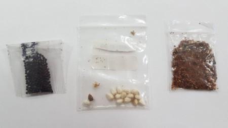 Ministério da Agricultura encontra fungos, bactérias e ácaro em pacotes de sementes não solicitados