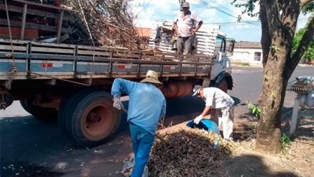 Tupã contará com mutirão contra escorpiões nesta quarta-feira (23)