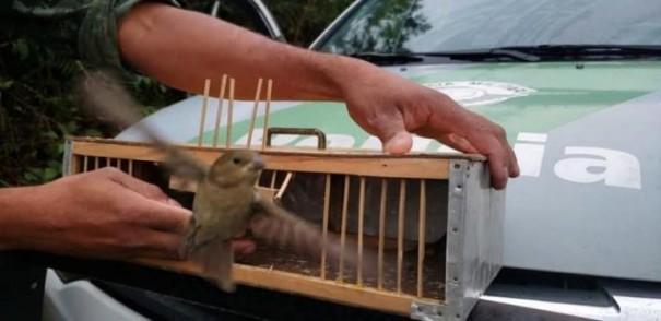 Polícia Ambiental devolve mais de 600 animais à natureza