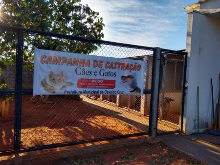 Osvaldo Cruz realiza mutirão de castração gratuita de cães e gatos