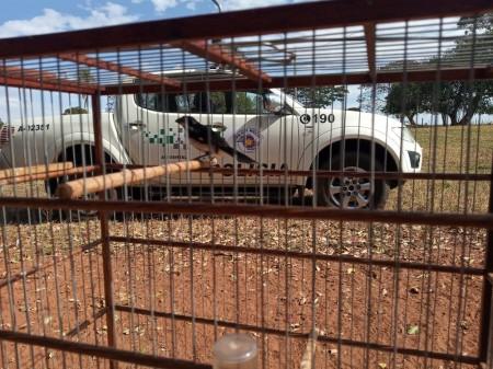 Polícia Ambiental resgata ave mantida irregularmente em cativeiro e a solta no Parque Estadual do Rio do Peixe