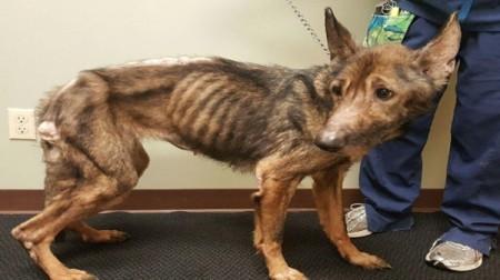 Em Lucélia, projeto de lei quer obrigar autor de maus tratos a animais a pagar gastos com tratamento