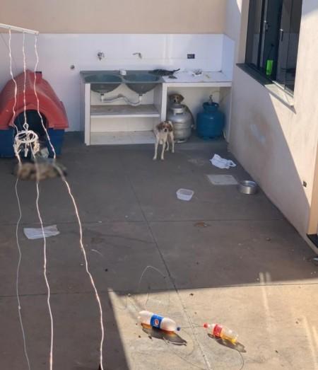 Rapaz é multado em R$ 12 mil por maus-tratos a animais domésticos e morte de cão, em Presidente Venceslau