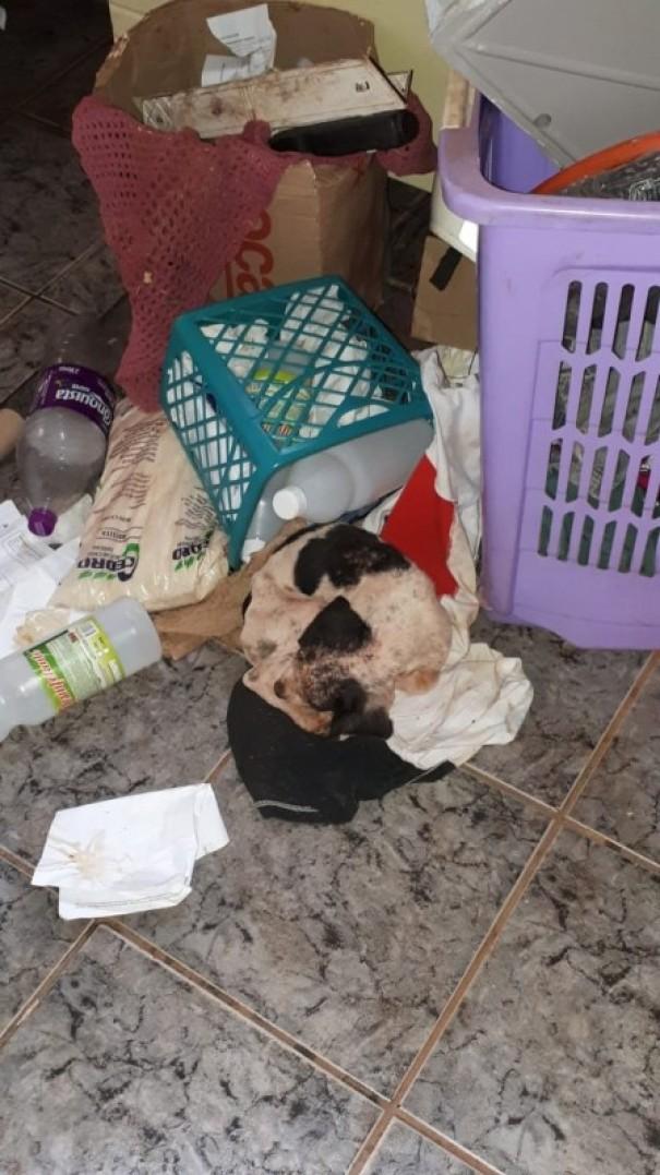 Cachorro encontrado sem alimentação e água em casa é resgatado em Teodoro Sampaio
