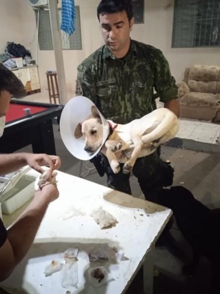 Cachorro é resgatado após passar por castração em república de estudantes em Presidente Prudente