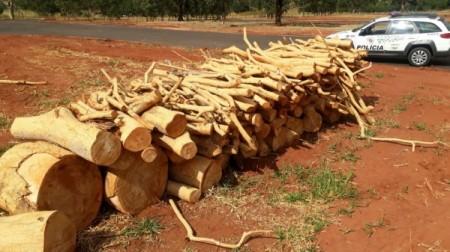 PM Ambiental flagra corte de árvores em propriedades rurais e multas chegam a R$ 4,5 mil