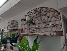 Morador de Osvaldo Cruz é multado em R$ 4,5 mil por manter aves em cativeiro