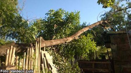 Árvore cai e danifica parede, telhado e forro de casa em Bastos