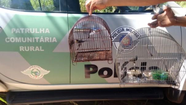 Polícia Ambiental resgata pássaros silvestres e aplica multa para criador em Adamantina