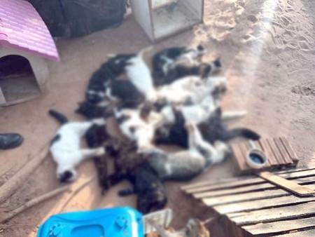 Mais de 15 gatos são encontrados mortos e polícia vai investigar