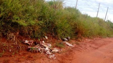 Abate clandestino de gado causa mal cheiro na região leste de Osvaldo Cruz