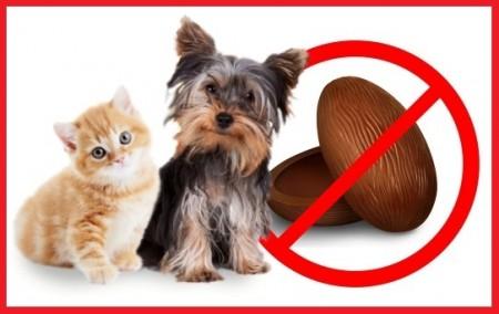 Alerta: chocolate provoca intoxicação grave em cães e gatos