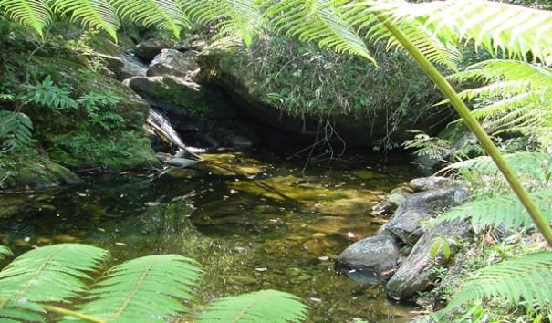 Falta de preservação coloca nascentes de água em risco
