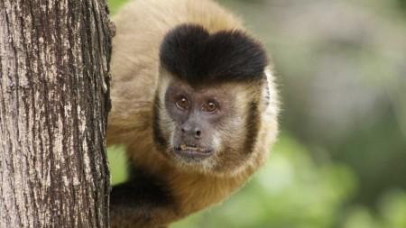 Descoberta de vírus da zika em macaco sugere ciclo silvestre da doença