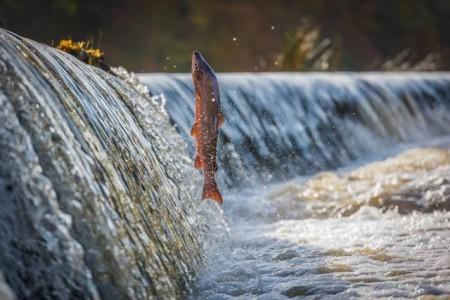 Piracema começa dia 1º e traz restrições à pesca em rios da região