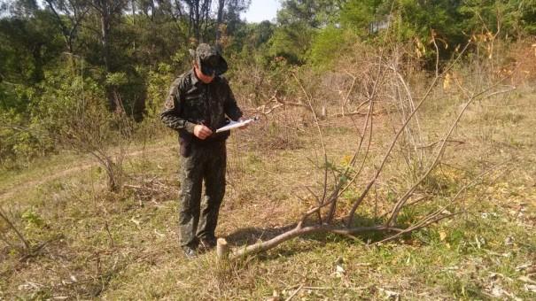 Corte e suspeita de envenenamento de árvores nativas em chácara rendem multa de R$ 11,7 mil em Osvaldo Cruz
