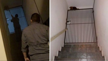 Tamanduá aparece escadaria de apartamentos no centro de Adamantina