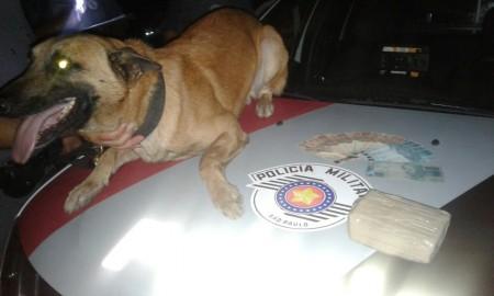 Polícia Militar prende traficante e apreende Maconha em Lucélia