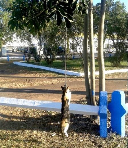 OAB de Osvaldo Cruz emite nota de repúdio contra o crime de maus tratos que resultou na morte do gato