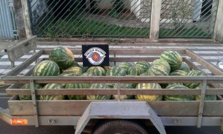 Polícia Militar detém várias pessoas por furto de melancia em propriedade rural de Osvaldo Cruz