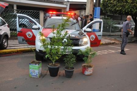 Polícia Militar de OC apreende pés de Maconha